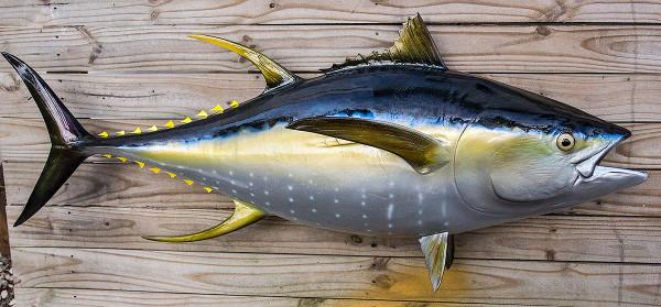yellowfin tuna fiberglass fish replica