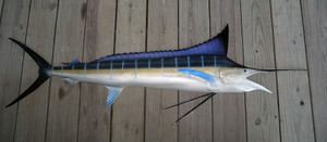 Blue Marlin 74R inch half mount fiberglass fish replica