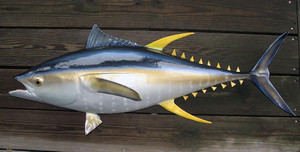 Yellowfin Tuna fiberglass fish replica