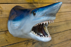 Shark head fiberglass fish replica