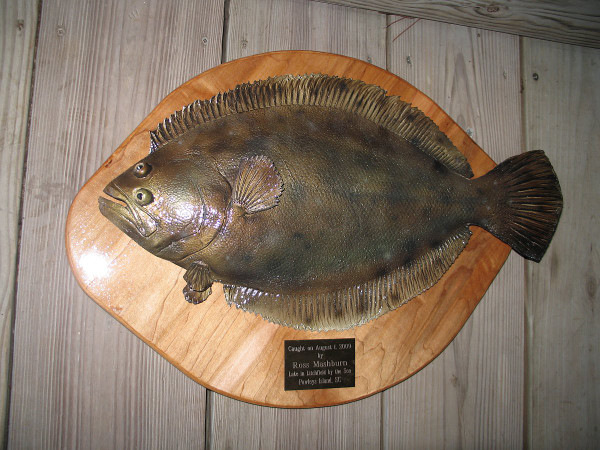 Flounder 20 inch half mount fiberglass fish replica with for Fluke bass fishing