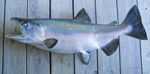 King Salmon fiberglass fish replica