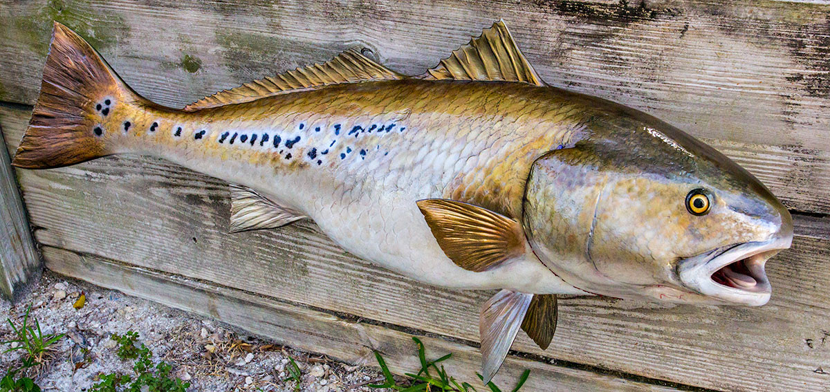 Redfish 42 inch full mount fiberglass fish replica the for Fiberglass fish replicas