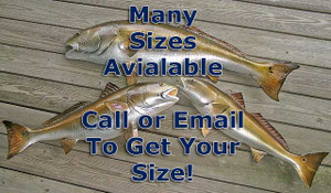 Many Sizes Available - Redfish