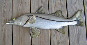 Snook 32 inch half Mount fiberglass fish Replica