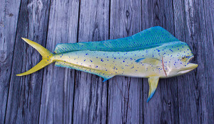 Mahi Mahi 41 inch Full Mount fiberglass fish replica