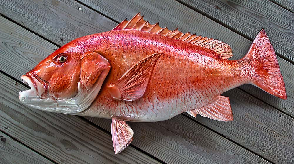 Red snapper 38 inch full mount fiberglass fish replica for Red snapper fish