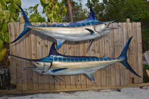 Blue Marlin 130 inch full mount fiberglass fish replica