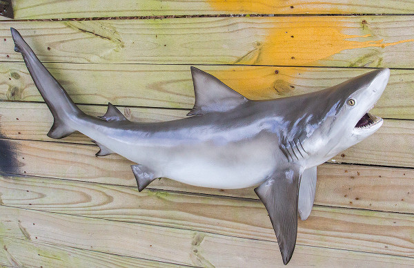 Bull shark 36 inch full mount fiberglass fish replica for Fiberglass fish replicas