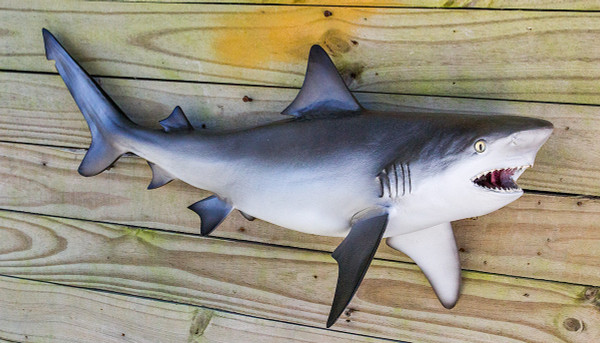 Bull shark 30 inch full mount fiberglass fish replica for Fiberglass fish replicas