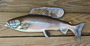 Arctic Grayling 20 inch fiberglass fish mount replica taxidermy