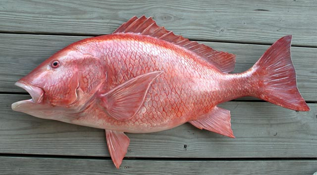 Snapper red 36 inch half mount fiberglass fish replica for Red snapper fish