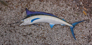Blue Marlin 80L inches Half Mount Fiberglass Fish Replica