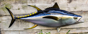 Tuna fiberglass fish replica