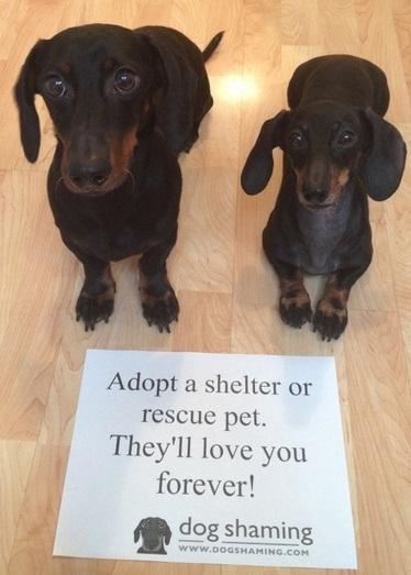 adopt-crop.jpg
