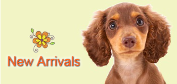 new-arrivals-lh-flower.png