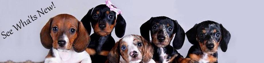 new-arrivals-puppies-2.jpg