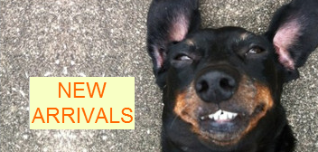 New Arrivals in Dachshund Apparel and Gifts