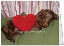 Dachshund Note Card Kiss Me You Fool