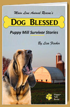 Dog Blessed Rescue Stories Book