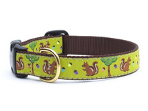 Squirrels Dog Collar