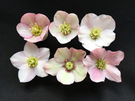 Helleborus x hybridus PK Select Light Pink