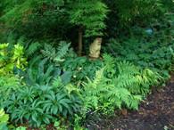 Hardy Ferns