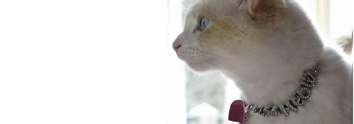 Custom Cat Collars