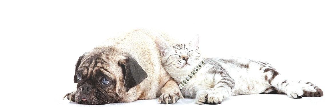Luxury Dog Collars, Cat Collars