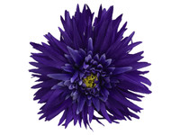Blue daisy double hair flower clips