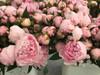 Sarah Bernhardt - Late Season Blooming