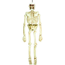 5 Ft Plastic Life Size Skeleton Decoration Amscan