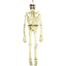 5 Ft Plastic Life Size Skeleton Decoration Amscan