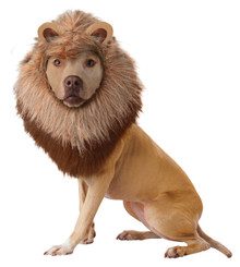 Lion Mane Small Dog Costume Halloween Headpiece Hat Animal Planet