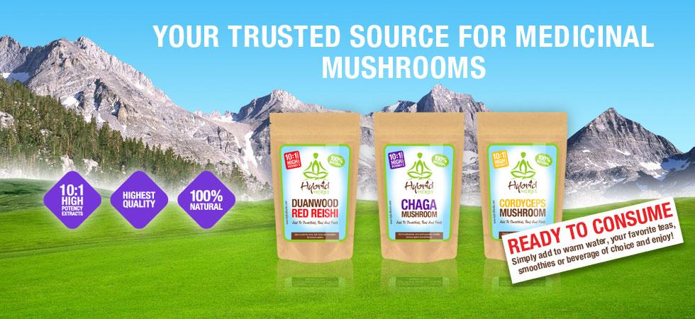 medicinal-mushroom-powders.jpg
