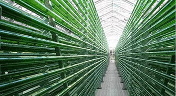 BioReactor at The Algae Answer