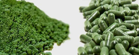 BioSuperfood at The Algae Answer