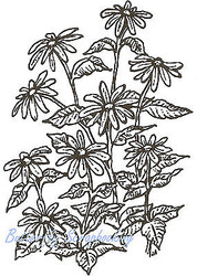 Black Eyed Susan Flowers Wood Mounted Rubber Stamp Northwoods Rubber Stamp New