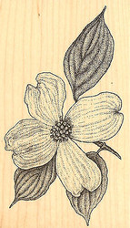 Botanical Dogwood 2 Wood Mounted Rubber Stamp Impression Obsession Aislinn Adams