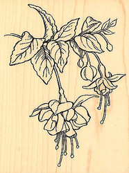 Botanical Fuchsia Flowers Wood Mounted Rubber Stamp Stampendous Stamp R166 NEW