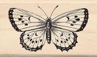 BUTTERFLY B Wood Mounted Rubber Stamp Brenda Walton by Inkadinkado NEW