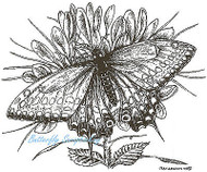 Butterfly Swallowtail On Cleome Wood Mounted Rubber Stamp Northwoods Stamp New