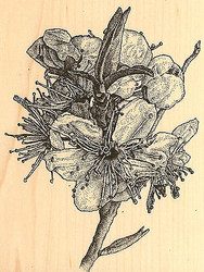 Chinese Plum Wood Mounted Rubber Stamp Impression Obsession Aislinn Adams New