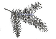 Christmas Pine Tree Branch, Wood Mounted Rubber Stamp NORTHWOODS - C9250