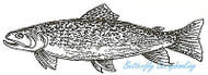Fish Brook Trout Fishing Wood Mounted Rubber Stamp Northwoods Rubber Stamp New