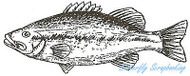 Fish L Mouth Bass Fishing Wood Mounted Rubber Stamp Northwoods Rubber Stamp New
