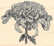 Giant Chrysanthemum Wood Mounted Rubber Stamp IMPRESSION OBSESSION Flowers New