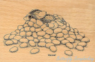 HOUSE MOUSE Jelly Bean Nap Wood Mounted Rubber Stamp STAMPENDOUS HMP08 New