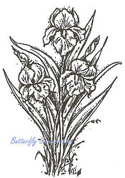 Iris Flowers Wood Mounted Rubber Stamp Northwoods Rubber Stamp New