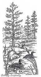 Loon Family And Lakeshore Scene, Wood Mounted Rubber Stamp New NORTHWOODS -O8536